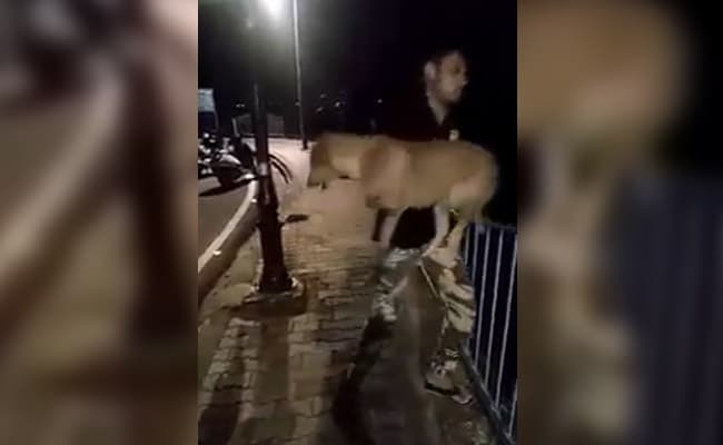 bhopal man throws a dog