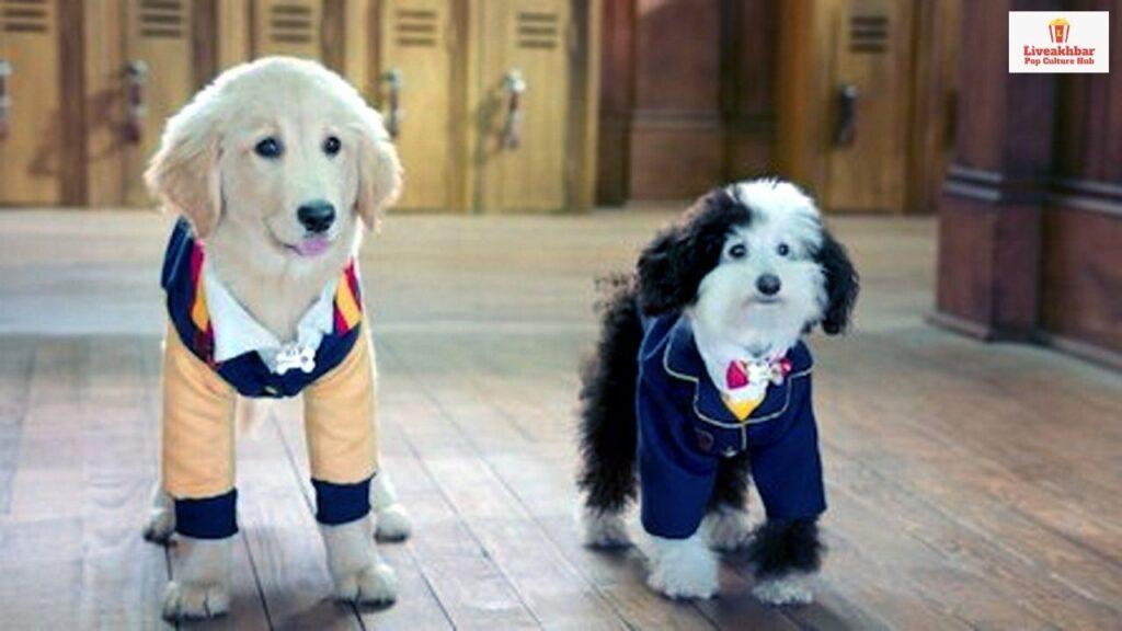 Pup Academy Season 2 Release Date